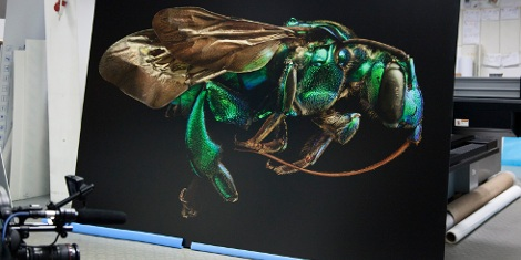 Titled Microsculpture; the exhibition reveals images of selected specimens from the museum's collection like they have never been seen before, in large-format detail.
