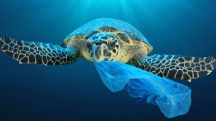 Perfect Colours has launched new website to promote the use of eco-conscious HP Recycled Satin Canvas made from discarded water bottles retrieved from the sea.
